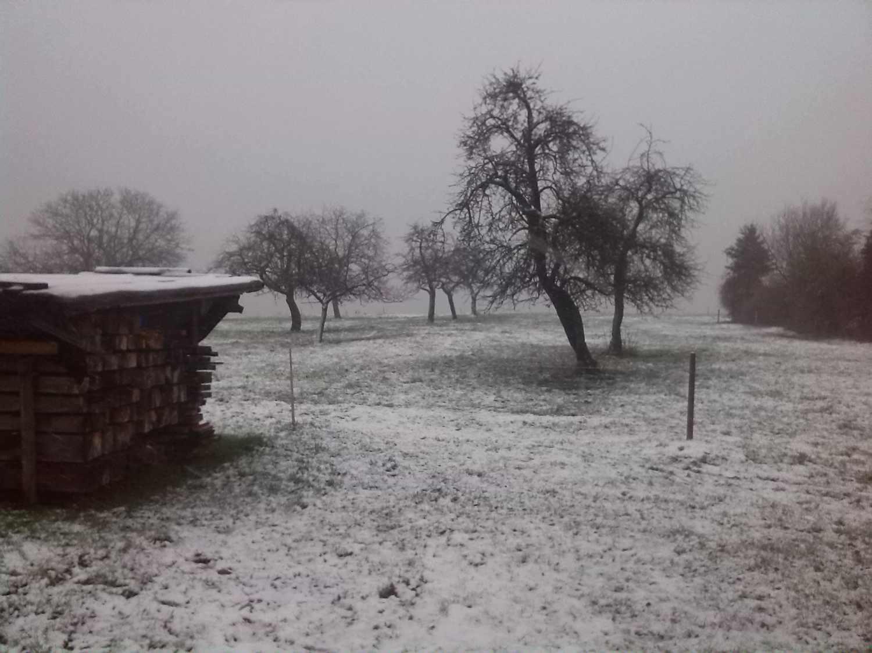 Winterwiese