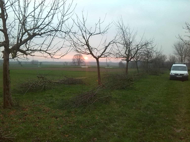 Baumschnitt im Sonnenaufgang
